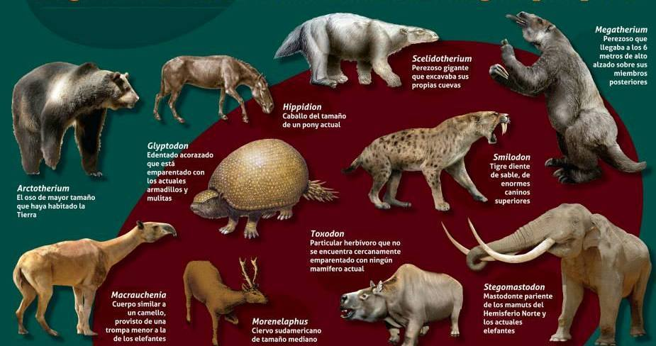 Poster animales